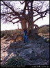 A Baobab in Wadi Hinna, Dhofar (Shanfari.net) Tags: trees summer tree nature lumix raw natural panasonic malvaceae oman wadi fz mountian zufar digitata rw2 salalah hinna الصيف sultanate dhofar عمان khareef طبيعة جبل جبال وادي mirbat adansonia سلطنة خريف صلالة adansoniadigitata صلاله حنه ظفار الخريف محافظة موسم governate حنة dofar fz38 marbat مرباط fz35 dmcfz35 القيظ qaith
