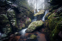 Ambiance hivernale au Mont Aigoual (Jérémie Toussaint Photography) Tags: mountain river cascade waterfall snow grass trees rocks green leave winter cold mood outdoor forest calm france gard montaigoual fog