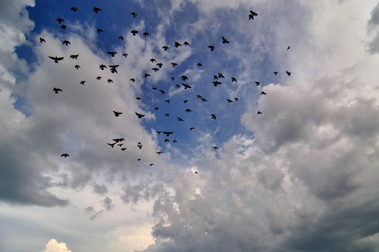 flock_0084