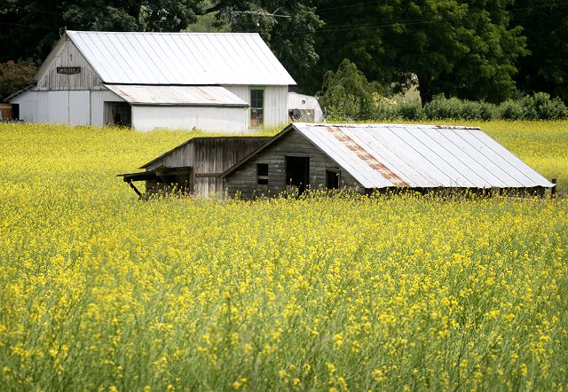 Melqua Barn in Yellow