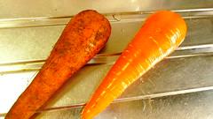 有機野菜のニンジン