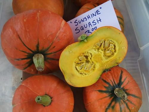 Sunshine Squash