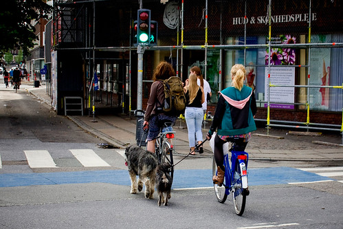 Copenhagen Dog Walking