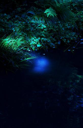 魔王の棲む沼