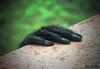 Hand (Luca Morlok) Tags: italy nature animals canon eos monkey hands italia hand respect natura help mano bergamo lombardia animali bg wwf lombardy orango savetheplanet rispetto valbrembana scimmia aiuto scimmie primati scimpanzè cornelle 450d lecornelle valbrembo orangu parcofaunisticolecornelle
