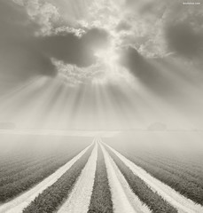There is a God Somewhere (Ben Heine) Tags: light art nature monochrome misty sepia clouds composition print worship heaven poem glow seasons belgium belgique god cloudy nikond70 spirit