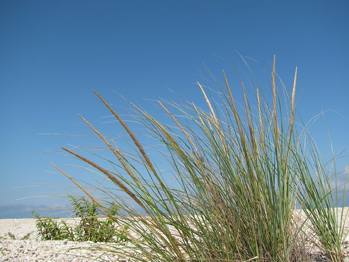Grasses on LI