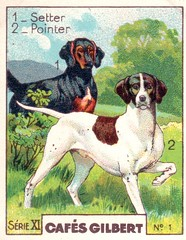 gilbert chiens003