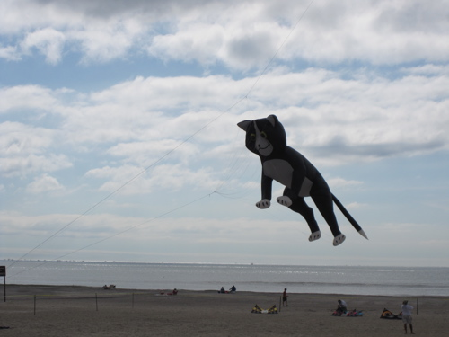 Giant Cat Kite