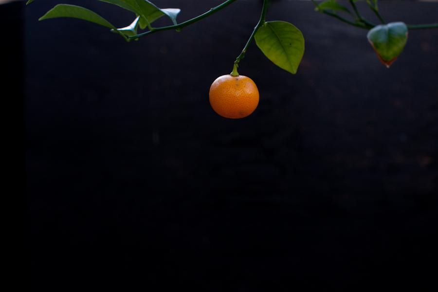 color_svineriet-4