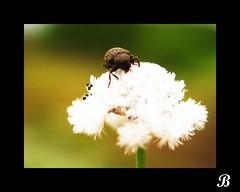searching ... (K.G. Balu) Tags: india nature photography kerala searching goldenmix aplusphoto diamondclassphotographer platinumphotography thebestshot naturethroughthelens mallmixstaraward mallmixstaraward naturephotographs perfectphotographer photographersworldbestfriends