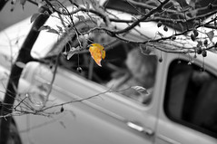 Following (Nh\:D/) Tags: bear bw monochrome car autumnleaf 18200mm selectivecoloring nikond90 yufuuin
