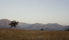 MG_6378-copy copy (samyukta_18) Tags: landscape greece naxos samyukta samyuktalakshmi