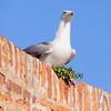 ... chi sono io??...Il figlio della truccatrice!! (adriana p. 蠍/44Livorno) Tags: fauna uccelli marzo 2010 marini img9479 gabbianorealezampegialle ☼gigilivornosfriends☼