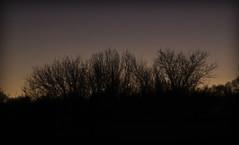 Tree sil
