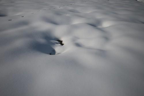 200912307748雪_R