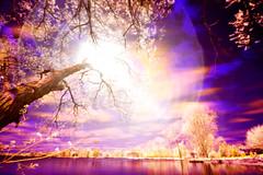 The Tree of Life (Matt Molloy) Tags: life longexposure blue light red orange white canada tree yellow photoshop crazy interesting colours purple dream filter infrared neat lakeontario effect coloured mattmolloy ir950