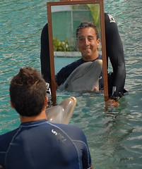 dolphin fun (ABC Dolphin Trainer Academy) Tags: dolphin cancun cayman anguilla tortola trainer trainingsession dolphindiscovery animaltraining dolphintrainer positivereinforcementtraining entrenamientorefuerzopositiva entrenadordedelfines