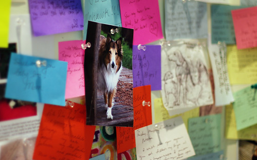 R.I.P. Sadie - now on the wall of remembrance