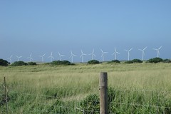 South Point - windmills Photo
