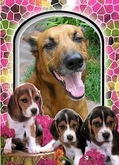 Feliz día del amigo!!!! (Misterymam) Tags: pets amigos dogs perros mascotas canito