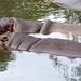 Woodland Park Zoo Seattle 040