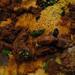 Asmara Mid-Feast