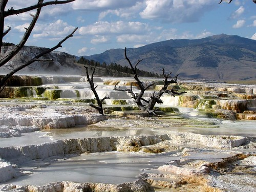 Mammoth Hot Springs - Upper Terrace