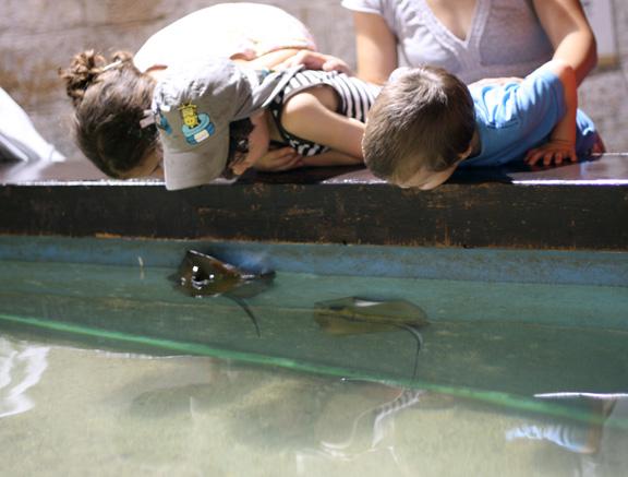 aquarium open pool