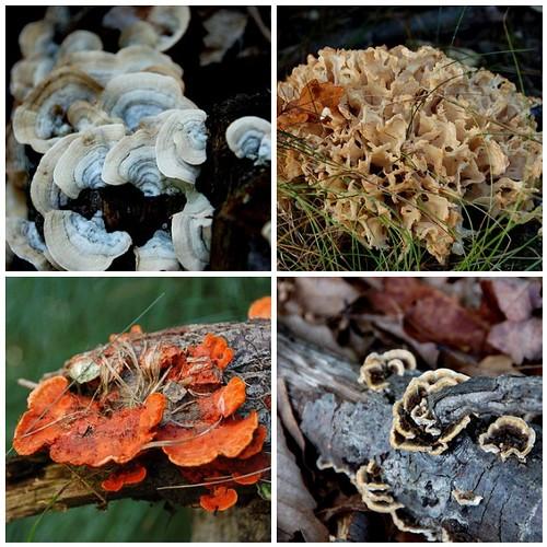 Fungus mosaic