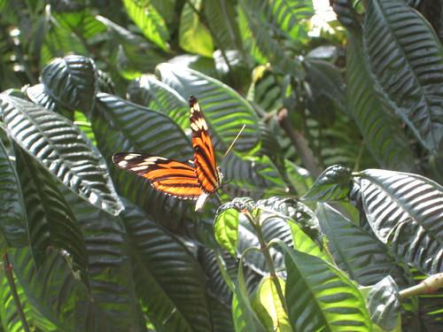 Butterfly Garden 017