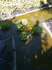 20090913-10 (Un couple d'enfer) Tags: jardin tours gloriette
