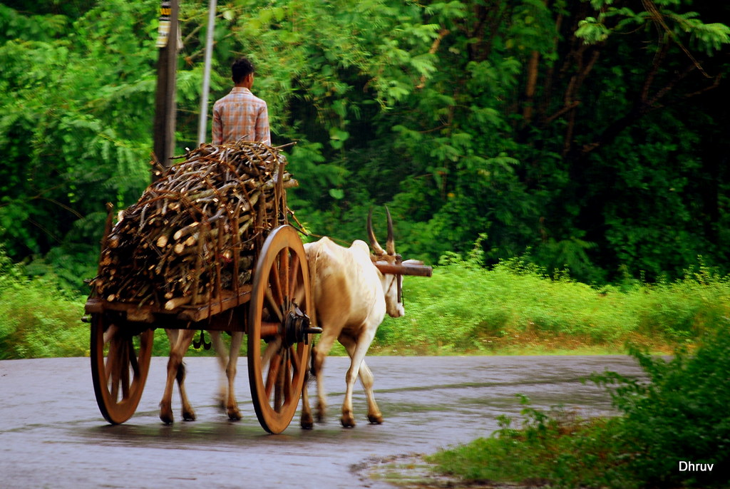 bullock cart - With wooden wheels