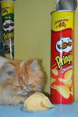 my cat loves pringles
