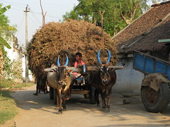 India - Sights & Culture - rural transport truck [Photo by mckaysavage] (CC BY-SA 3.0)
