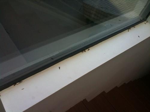 Termites swarming
