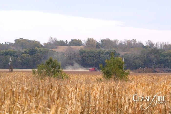 11-10-crops8