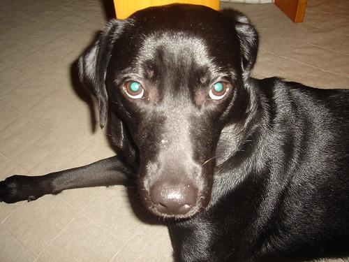 犬の画像 p1_11