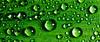 Water Drops ~ Explored ~ (Sergiu Bacioiu) Tags: macro green nature water nikon natural drop foliage nikkor vr d300 105mm sb900