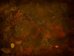 (Melissakis, H.) Tags: life fallleaves love nature pond decay digitalart scene longisland autumnleaves reflectioninapond