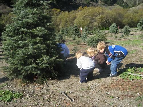 Xmas Tree Hunting