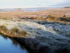 frost (gatalinkica) Tags: morning mist frost sunny naturereserve rush marsh montenegro solila