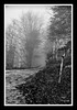 Faded words (andzer) Tags: road autumn bw cliff white mist black tree wet leaves rain fog forest word dead leaf flora nikon branch path label scout andreas explore faded stick fade scape 2009 zervas andzer wwwandzergr