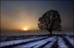Waiting for the light (angus clyne) Tags: old blue winter light red mist snow cold tree field misty fog sunrise dead dawn scotland potatoes warm frost branch bare perthshire frosty rows sycamore twig lone bleak lonely withered twigs barren shaws murthly furrows flikcr leefilters colorphotoaward impressedbeauty thesecretlifeoftrees