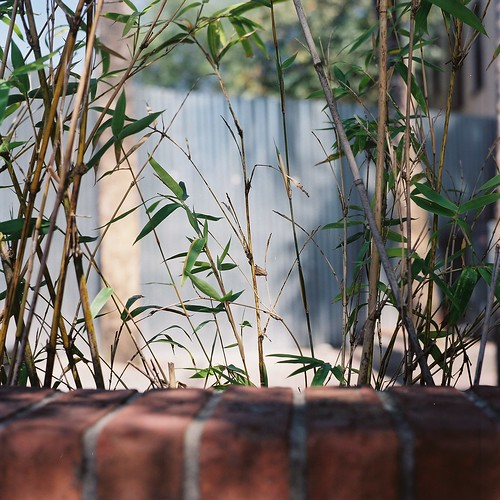 bamboo beyond a brick wall