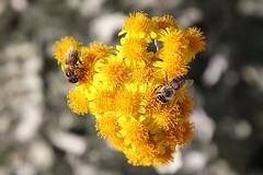 #sharing (StefanFritz) Tags: flower flowers bloem bloemen stefan fritz stefanfritz