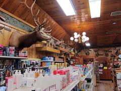 Wall Drug, South Dakota (pr0digie) Tags: wall southdakota drug store taxidermy deer elk antlers coyote