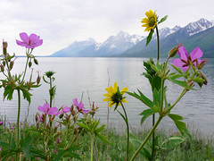 Sublimity (b_mccarley) Tags: park flowers summer lake mountains rockies grand jackson national wyoming teton tetons wy