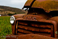 a pumpkin patch decoration (rosellaphoto) Tags: california old truck nikon rust rusty highway1 vehicle roadside aging halfmoonbay gmc d90 50mmeseries wwwrosellaphotocom rosellatibig bobsvegetablestandandpumpkinpatch