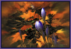 Autumn Blue. (Picture post.) Tags: flowers autumn brown green nature gold golden autumnleaves autumncolors 1001nights colchicum goldenbrown tistheseason otw autumncrocus supershot abigfave platinumphoto goldstaraward spiritofphotography vosplusbellesphotos